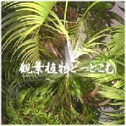 観葉植物どっとこむ。
