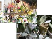 花のお届けサービスも充実してます!