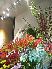 開店祝い・開業祝い・公演祝い・イベント・パーティーのスタンド花や胡蝶蘭はお任せ!