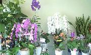 活け花(生け花)の花材やアレンジメントもおまかせください。