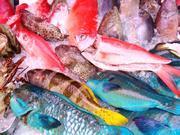 和歌山で新鮮な魚が欲しいなら当社にお任せください!